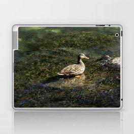 Female Mallard in the Shallows Laptop & iPad Skin