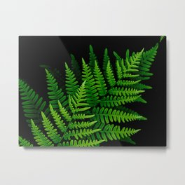 Fern Fronds on Black Metal Print
