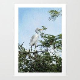 Cattle Egret In a Tree Art Print