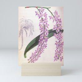 Aerides Lobbii Vintage Lindenia Orchid Mini Art Print