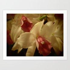 Orchids II Art Print