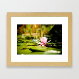 Lilly Pad Framed Art Print