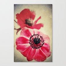 Sweet Anemone II  Canvas Print