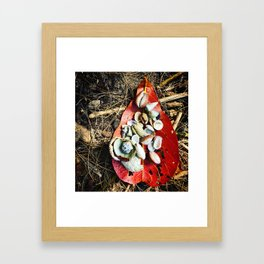 Shell Treasures Framed Art Print