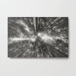 Bamboo Forest (Black and white) Metal Print