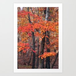 Forest Trees Art Print