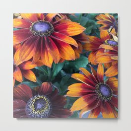 Orange Daisies Metal Print