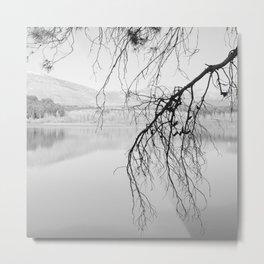 Magic Trees. Foggy sunrise. At The Lake. Metal Print