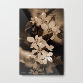 Apple Blossom Metal Print