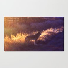 The Coyote Canvas Print