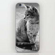 Lloyd- Black and White Cat Photography iPhone & iPod Skin