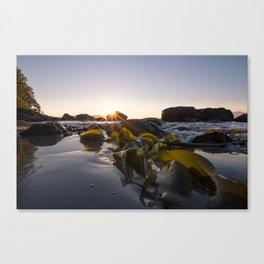 Morning Kelp Canvas Print