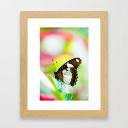 Orchard swallowtail Framed Art Print