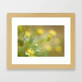 Yellow flower surrounded Framed Art Print