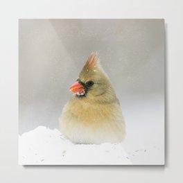 Winter Northern Cardinal Female  Metal Print