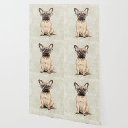 Mr French Bulldog Wallpaper