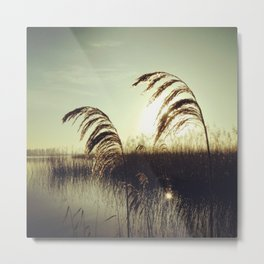 Reed fever Metal Print