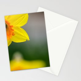 Yellow daffodils / Gelbe Osterglocken Stationery Cards