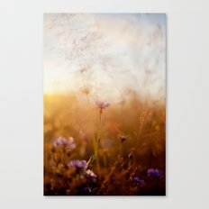 Soft Light Canvas Print