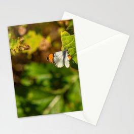 Anthocharis sara sara orange tip Butterfly on Leaf Stationery Cards