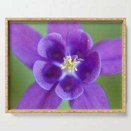 Fluid Nature - Purple Aquilegia Flower Serving Tray