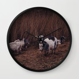 Goats in the wild, Groningen, Netherlands Wall Clock