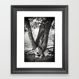 African Safari Lion Framed Art Print