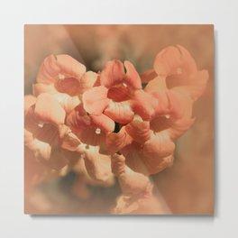 Softly Peach Metal Print