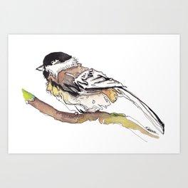 Black Capped Chickadee Art Print