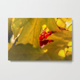 Autumn Fruits - Squashberry Metal Print