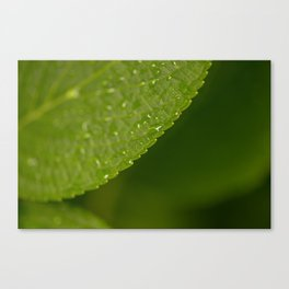 Floral Leaf 05 | Nature Photography Canvas Print