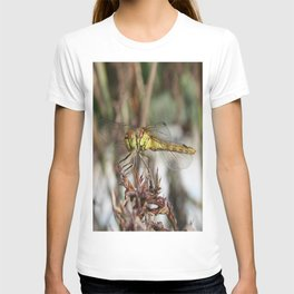 Brown Dragonfly On Husks With Garden Background T-shirt