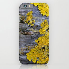 Tree Bark Pattern # 3 with yellow lichen iPhone Case