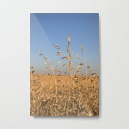 Provence Summer field Metal Print