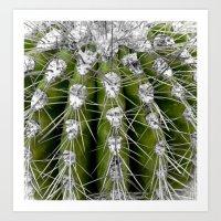 Green Cactus Art Print