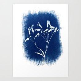 Herbal Sunprint, Wildflower Print, Botanical Cyanotype Art Print