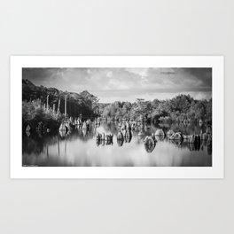 Dead Lakes Florida Black and White Art Print
