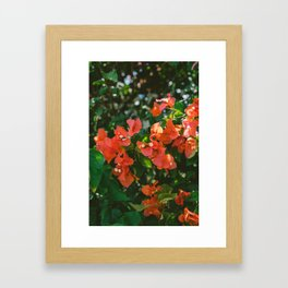 Tropical Hawaii IV Framed Art Print