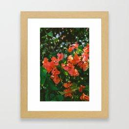 Tropical Hawaii IV Framed Art Print