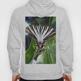 Swallowtail Buttterfly Resting on Oleander Leaves Hoody