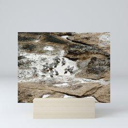 Sandpipers feeding in a tide pool Mini Art Print