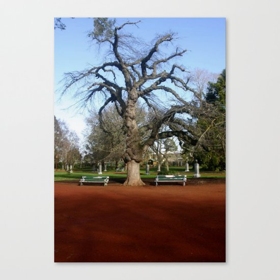 Elm Tree Canvas Print