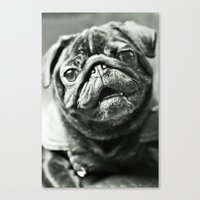 pug Canvas Prints featuring Pug by Falko Follert Art-FF77