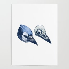 Blue Jay Skull Poster
