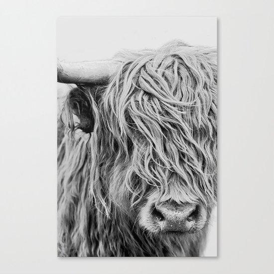 Scottish Highland Cow - Curls by rebeccadwyer