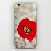 israel iPhone & iPod Skins featuring Vibrant Red Poppy, Israel by Kim Lucian Photography