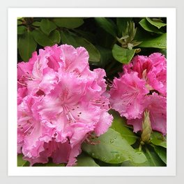 Rhododendron After Rain Art Print