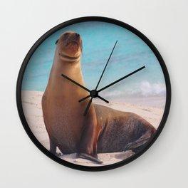 A Seal Sunbathe Wall Clock