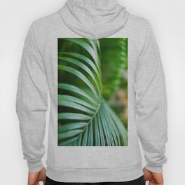 395. Palm Tree, Orchha, India Hoody