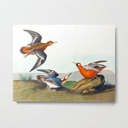 Red Phalarope Bird Metal Print